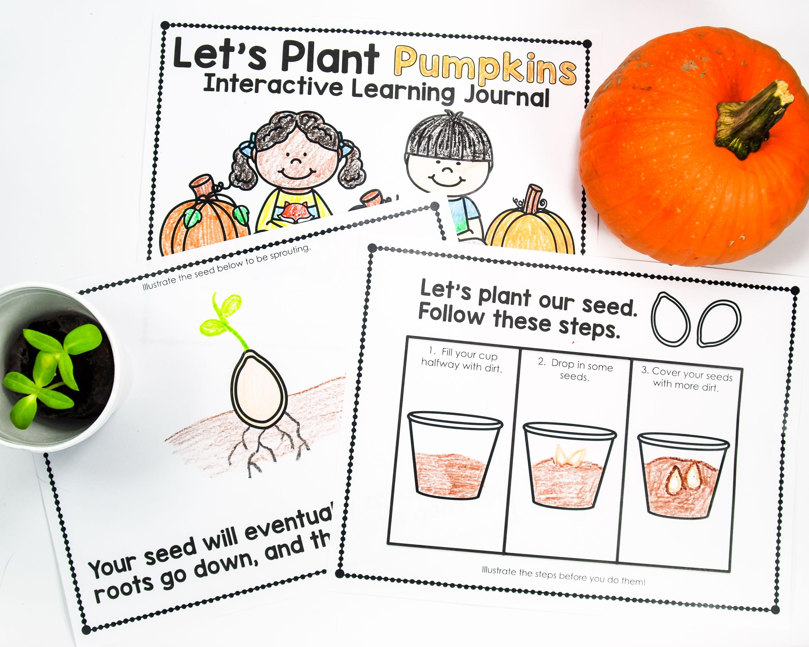 Planting Pumpkins In Kindergarten