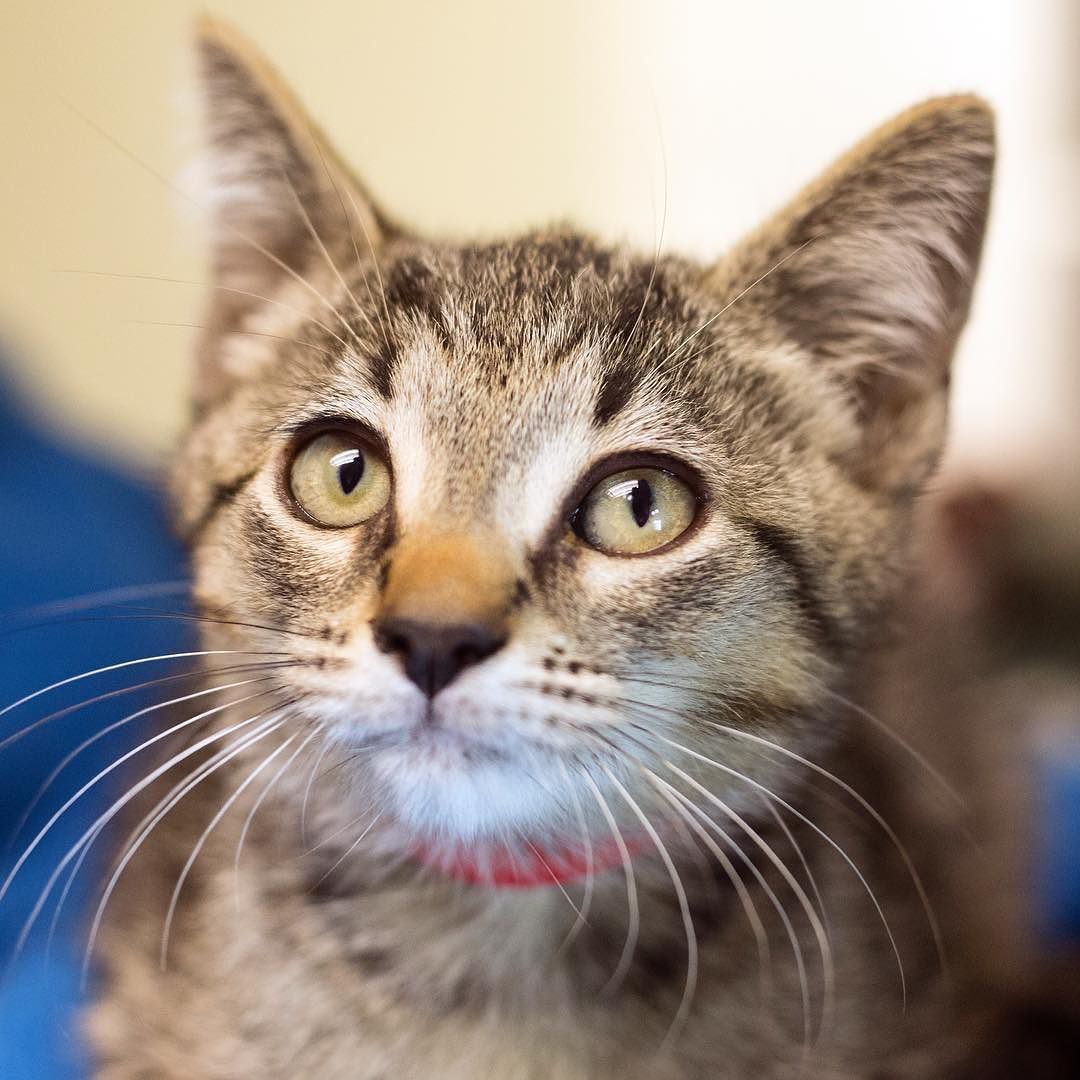 Happy Adopt a Shelter Cat Month everyone! Each spring