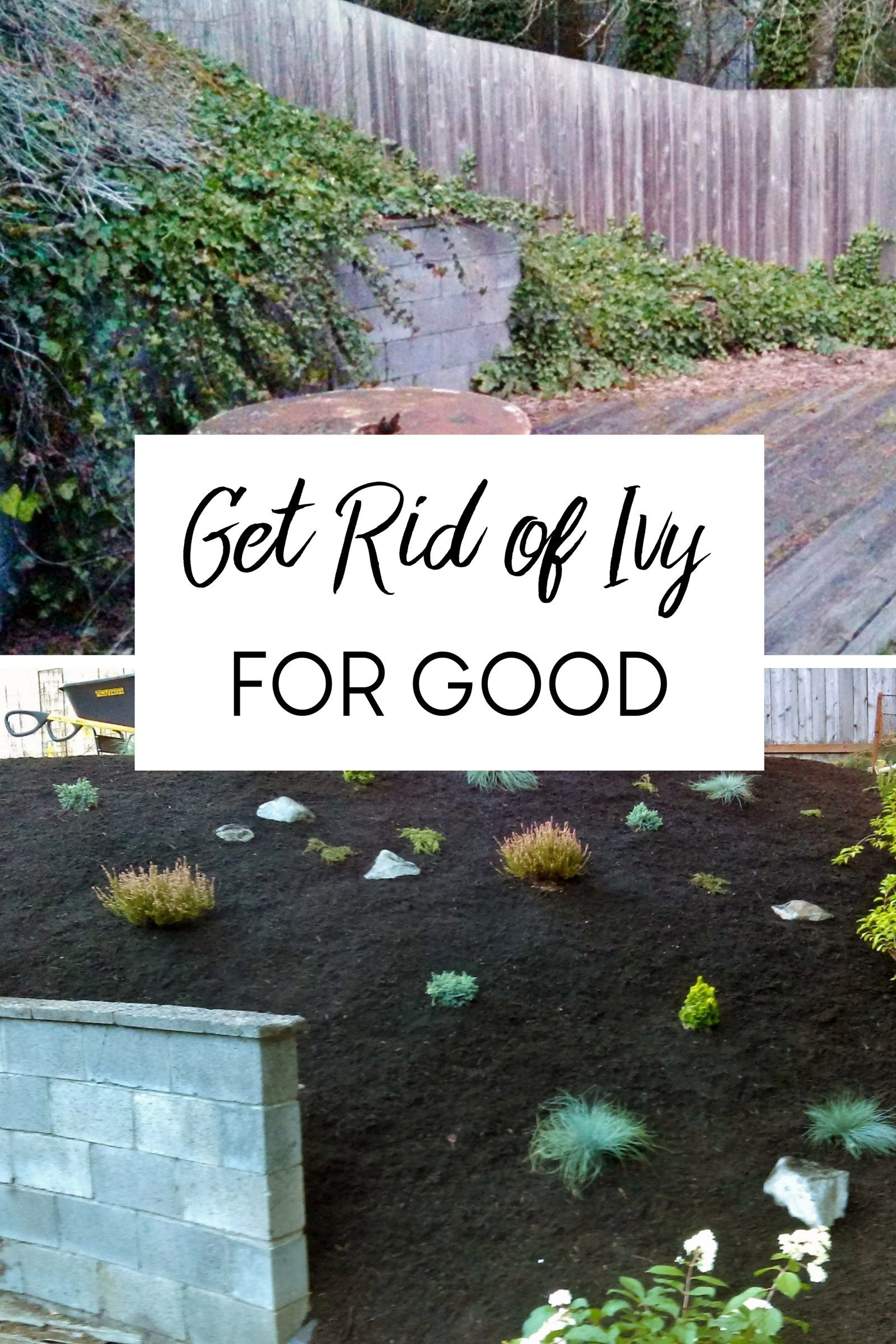 How To Get Rid Of Ivy Roots In Ground