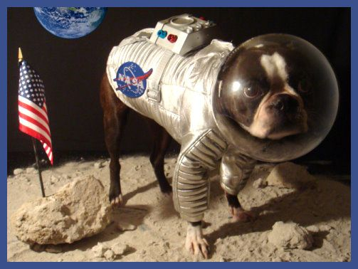 boston terriers in costumes google search - Halloween Costumes In Boston
