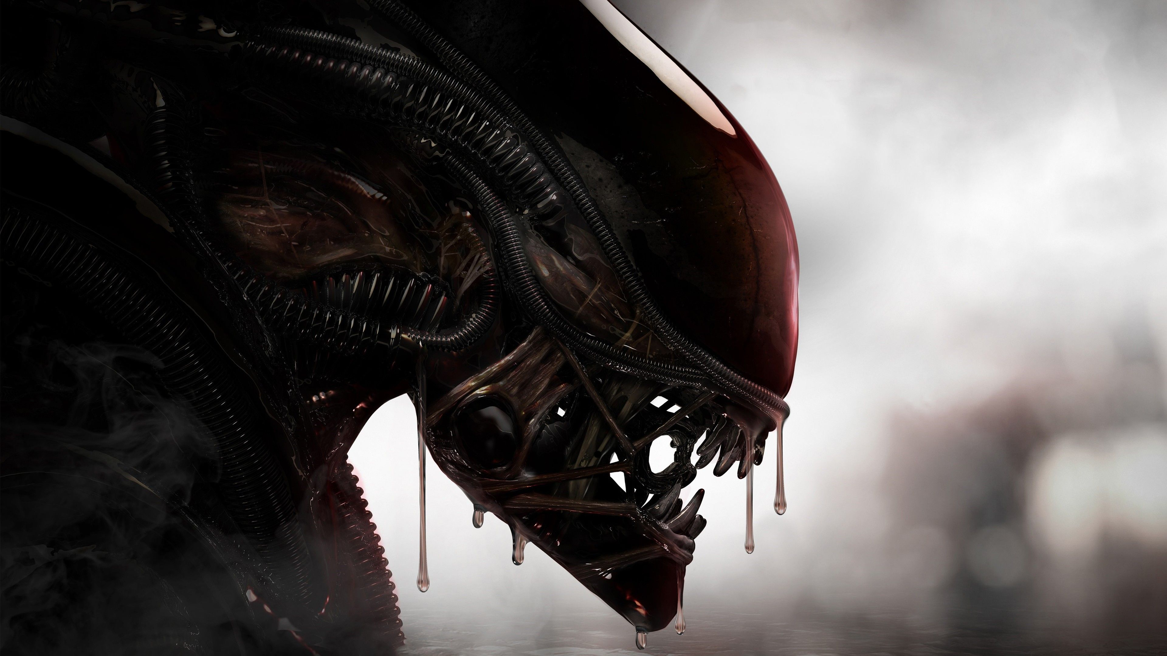 Aliens Xenomorph Creature 4k Hd Wallpapers Digital Art Wallpapers Creature Wallpapers Artist Wallpapers Alien Wallpapers Xenomorph Culture Art Aliens Movie