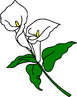 The Lady Wolf Svg Lily Painting Flower Drawing Calla Lily