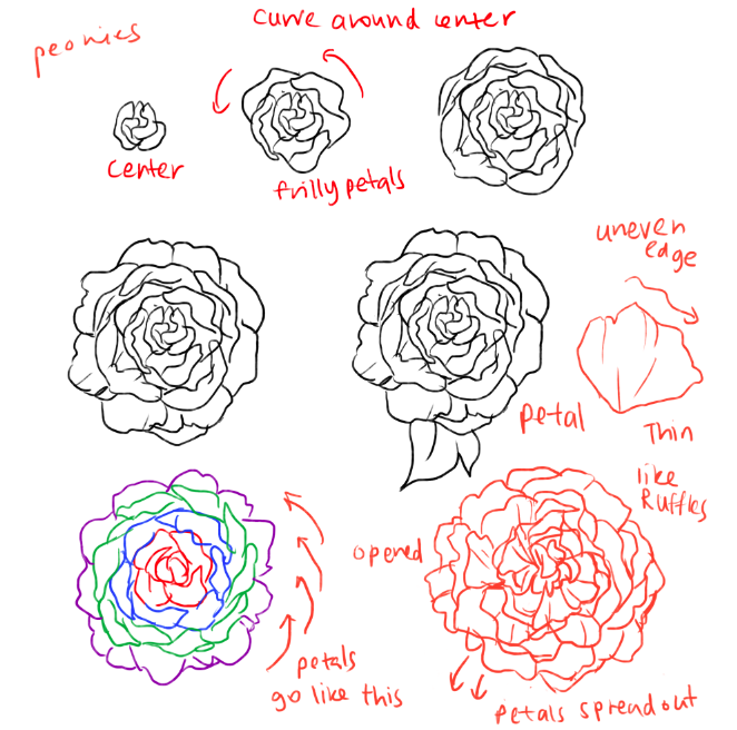 How to draw roses and peonies