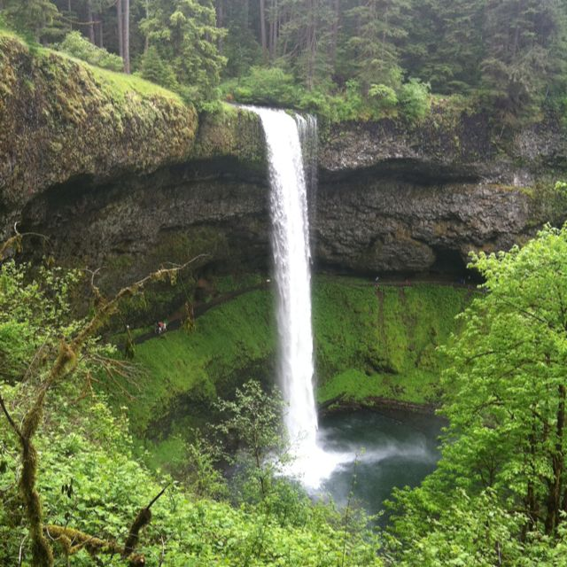 Pin By Alisa Gripp On Road Trips Oregon Vacation Silver Falls State Park Scenery
