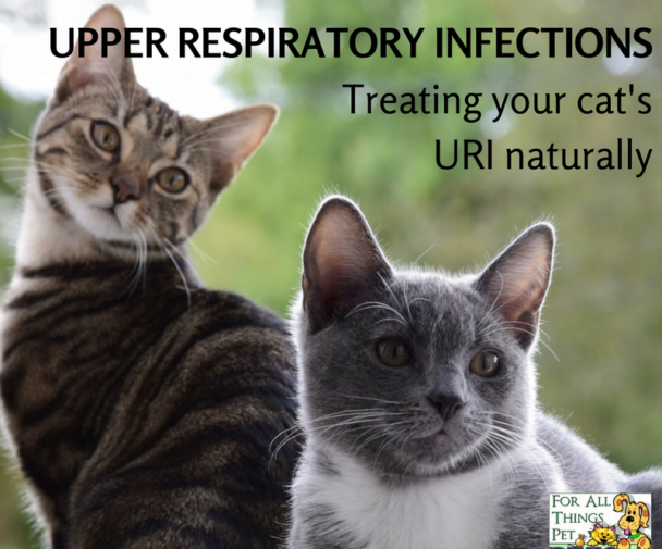 Pin On Cat Respiratory Health