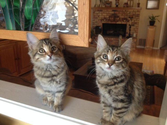 My sweet rescue babies - Luna and Salem