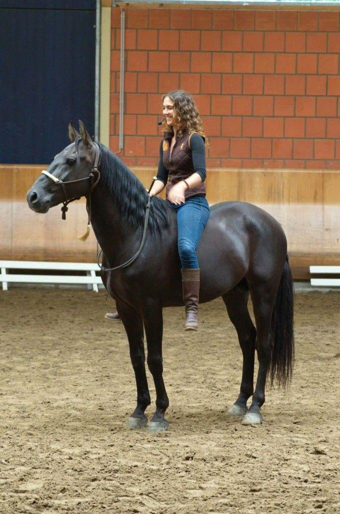Atila / Ostwind • HENGST- UND DECKSTATION STEINSBERG #cowboysandcowgirls