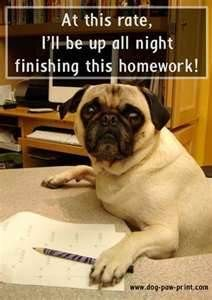 Funny Pug Pictures With Captions Bing Images Funny Dog