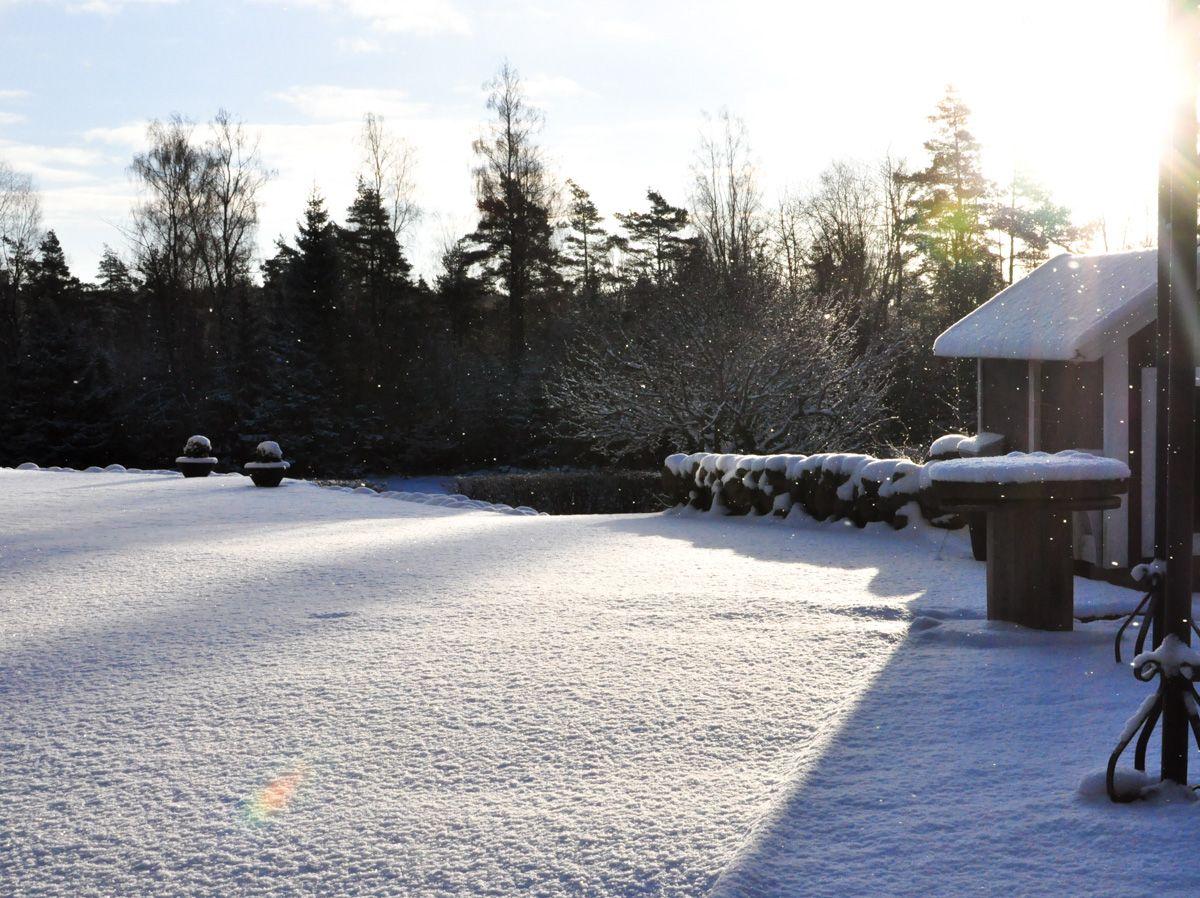Hagen kledd i snø