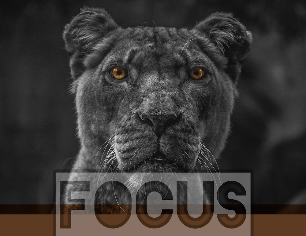 Focus Print (With images) Animal wallpaper