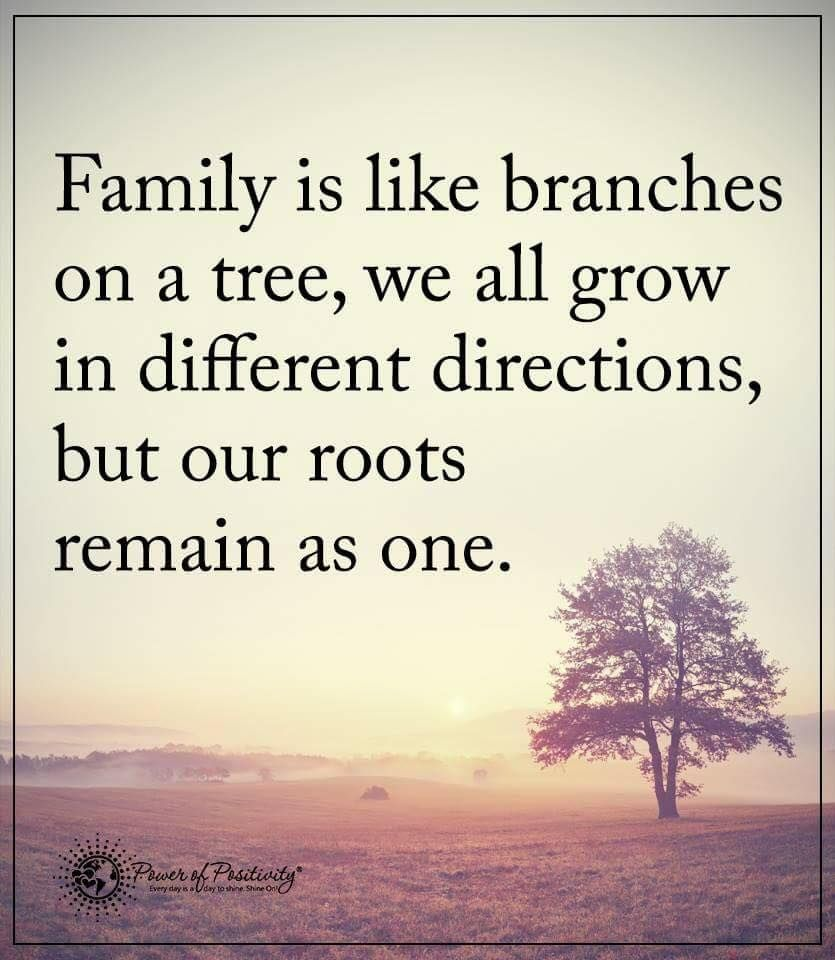 Power Of Positivity Family Tree Quotes Roots Quotes Tree Quotes