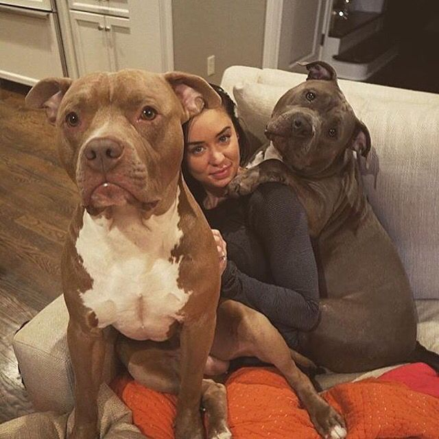 Katy Hearn And Her Beautiful Pits Beautiful Dogs Cute Animals