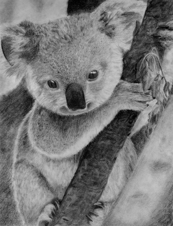 How to Draw a Baby Koala, Baby Koala, Step by Step ... |Cute Baby Koala Leg Drawing