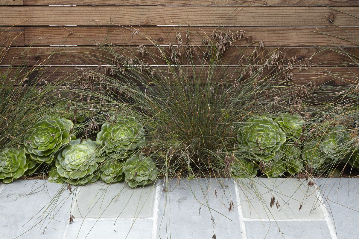 lannan1506_2-152_18476676564_o.jpg   Gardening - Sedum & Succulents ...