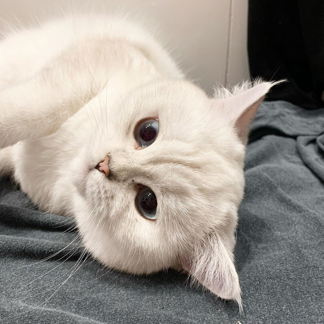 White Cats White cats, Funny cats, Beautiful eyes