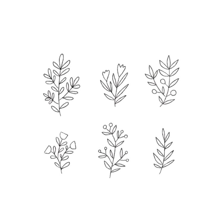 Minna May Design Drawing Plants Png Flower Drawing Design Plant Illustration Minimalist Flowers