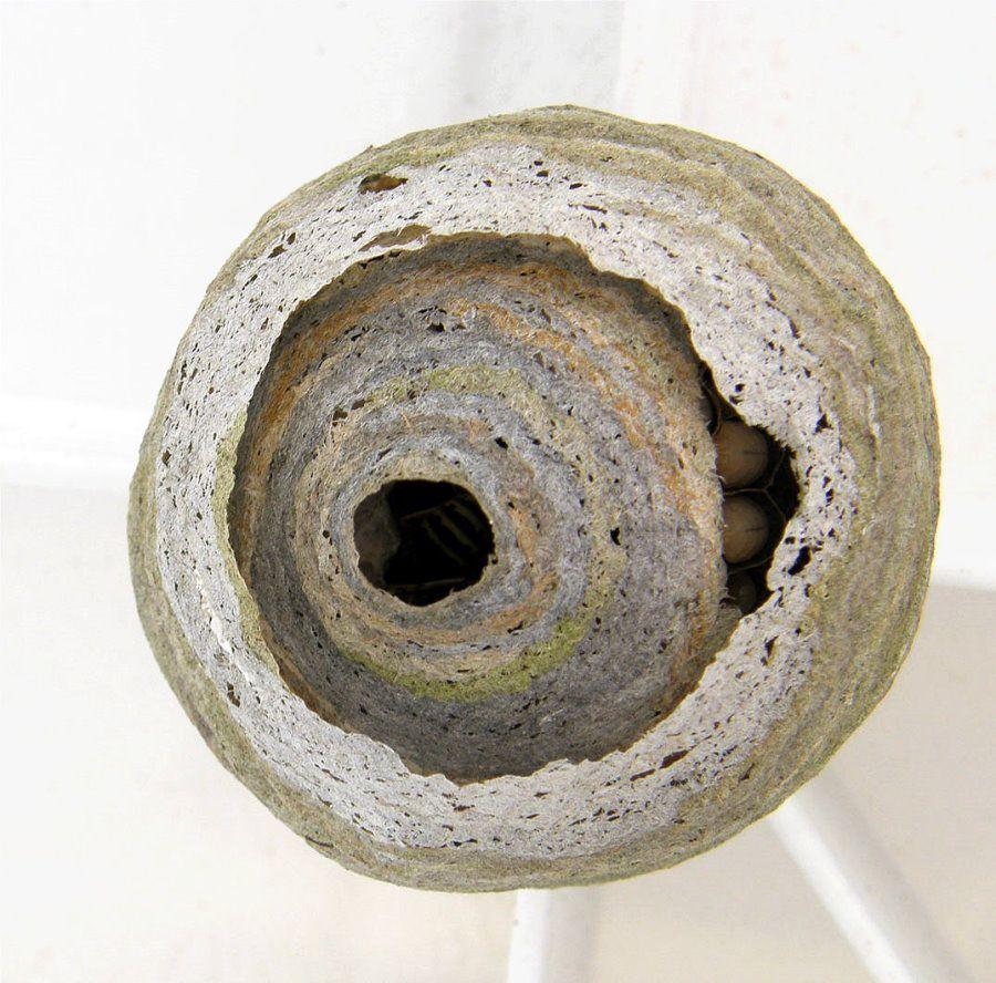 Wespennest Gezeichnet Google Search Wasp Nest Wasp Nest