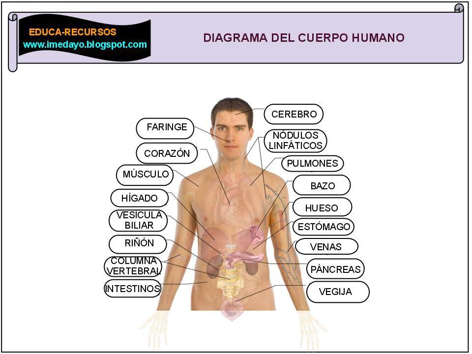 mapa cuerpo humano - Buscar con Google | hebreo | Pinterest | Cuerpo ...