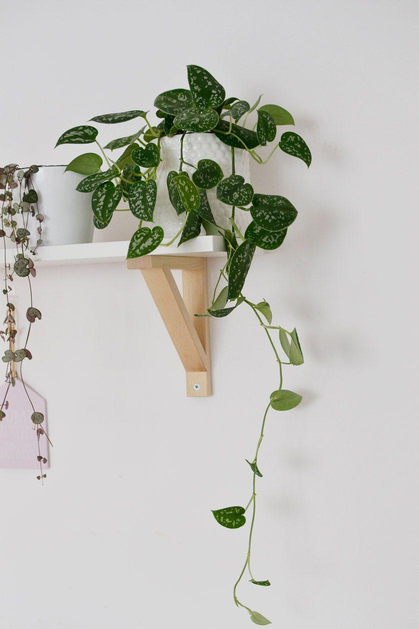 Rosliny Doniczkowe Zwisajace Pnace Rosliny W Moim Domu Plants Home Deco Deco