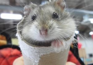 I Found Zack On Animal Rescue Animals Cute Animals