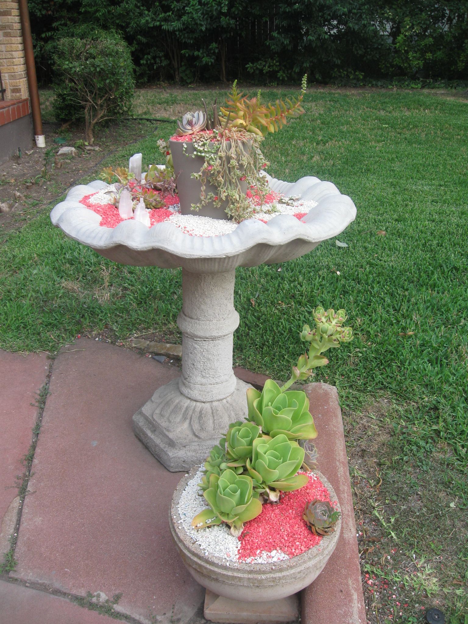 Outdoor succulent container garden #succulents #container garden #neon #modern