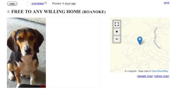Craigslist Dog Houses For Free - Gambar Ngetrend dan VIRAL