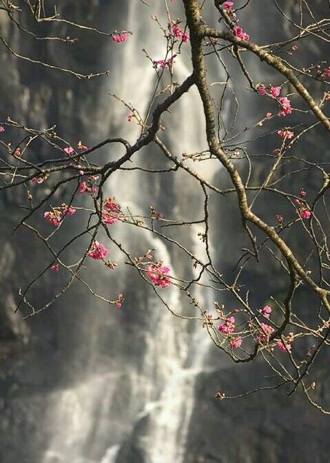 Cherry Blossoms And A Waterfall Ets Naturebath Nature Photography Beautiful Nature Photography