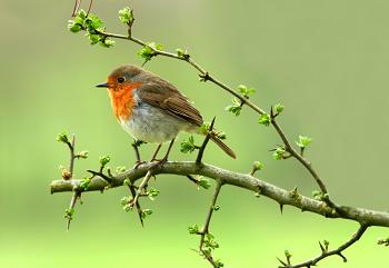 """Résultat de recherche d'images pour """"oiseau"""""""