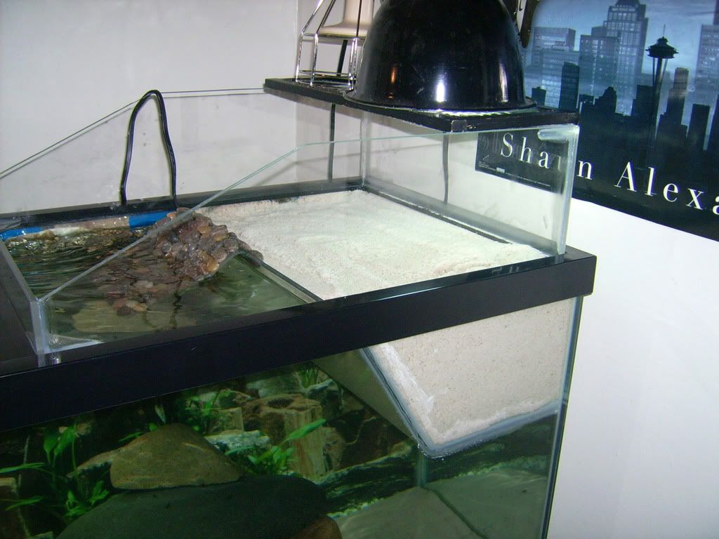 Tanks And Life Under The Sea On Pinterest Turtle Tanks Aquarium And Aquascaping