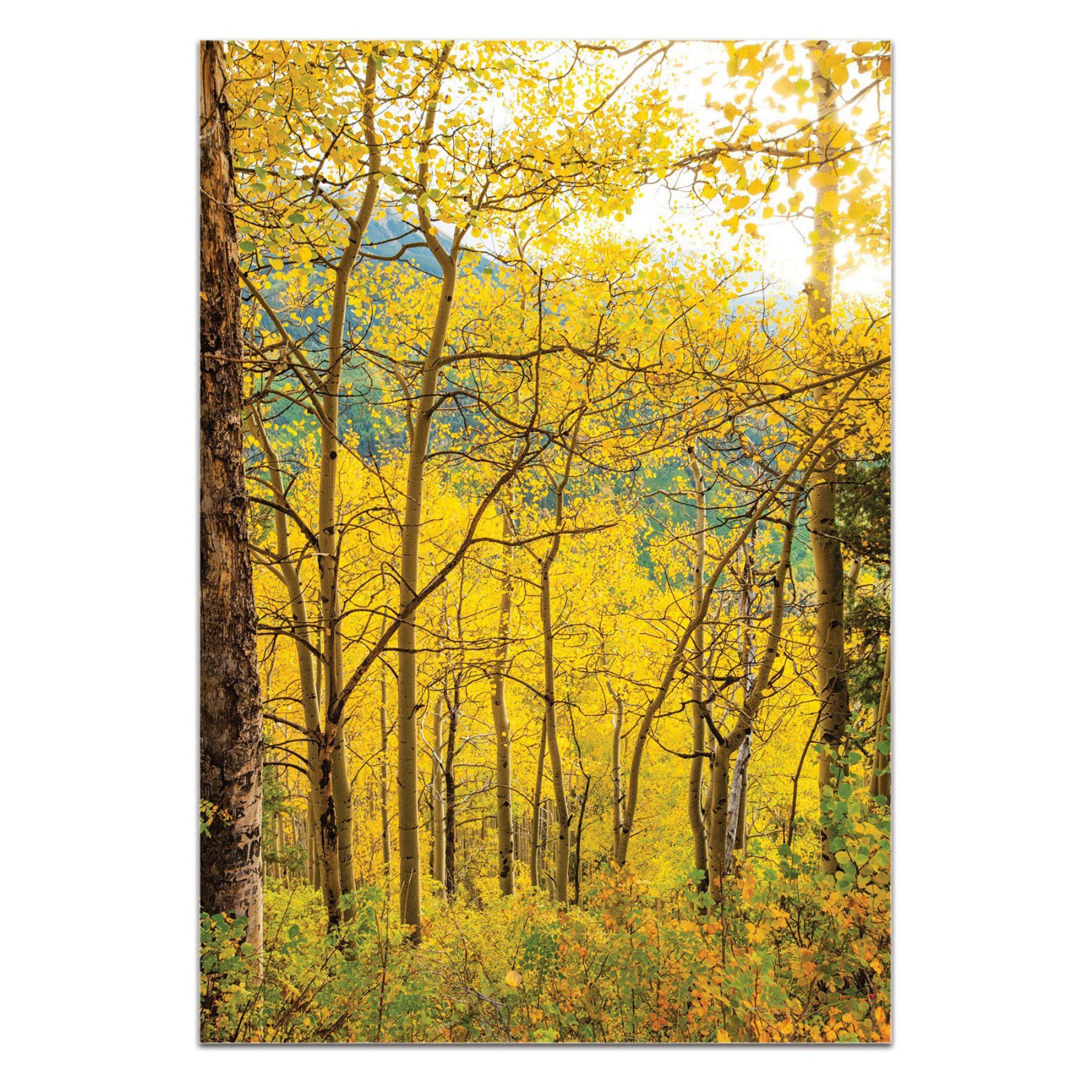 Metal Art Studio Aspen Path by Meirav Levy Wall Art - ME075MT | Products