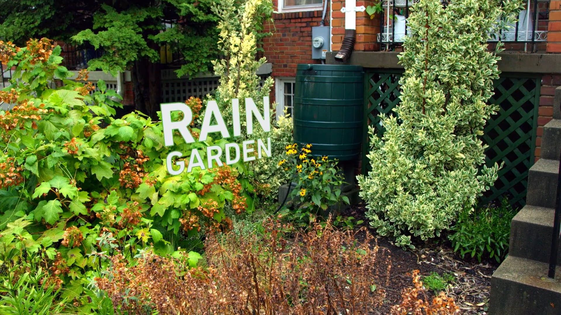 Design and Build a Rain Garden for Your School or Community | K-12 ...