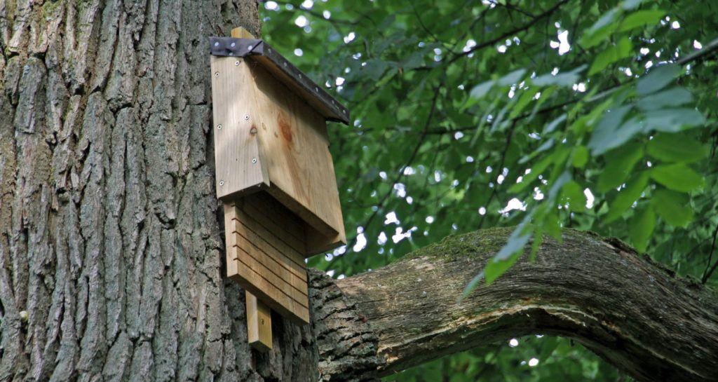 Attract Beneficial Bats To Your Garden Outdoor gardens