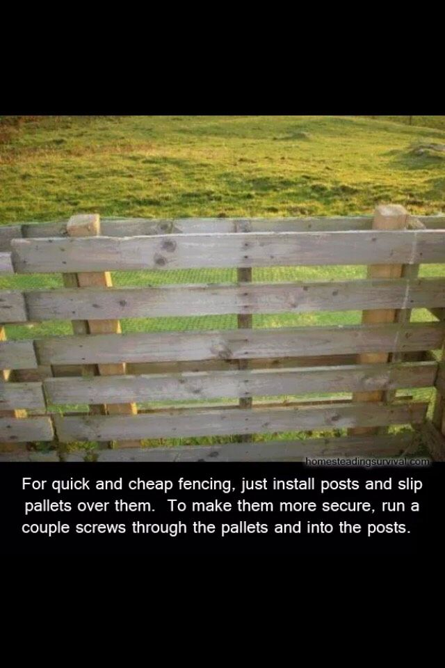 Cheapest And Easiest Way To Build A Fence Pallet Fence Cheap Fence