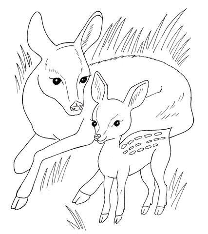 Malvorlagen Fur Tierbabys Ausmalbild Rehfamilie Ausmalbilder Kostenlos Zum Ausdrucken Druckbar Ausmalbilder Malvorlagen Tiere Ausmalen
