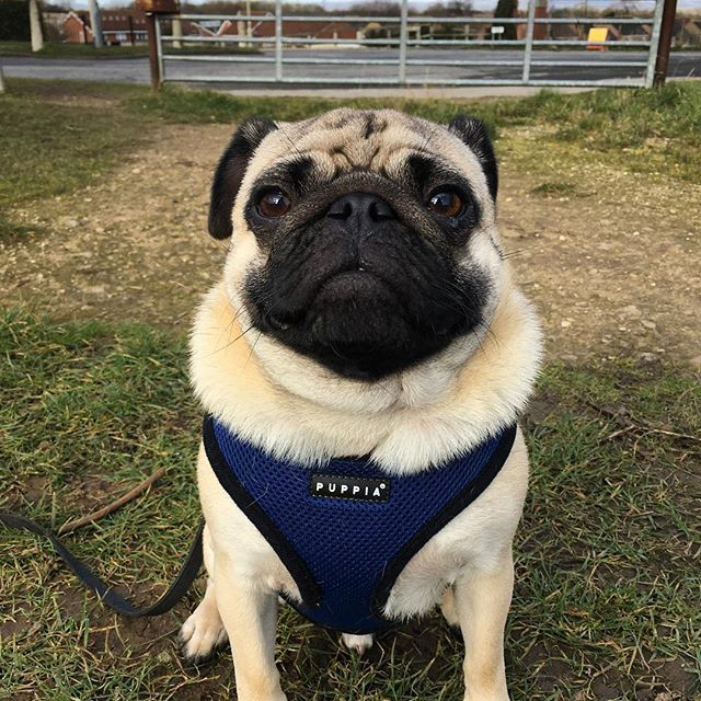 Tilly Lula Dogs Trust Dogs Dogs Trust Dog Adoption
