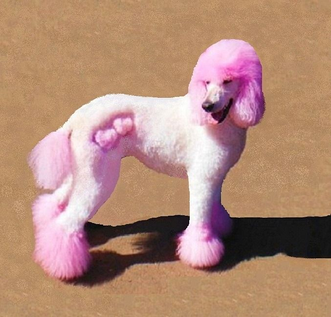 Repinned Creative Grooming Pink Poodle Hearts Dog Haircuts