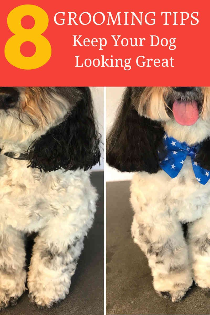 4 Simple Tips For Dog Grooming At Home Dog Grooming Tips Dog