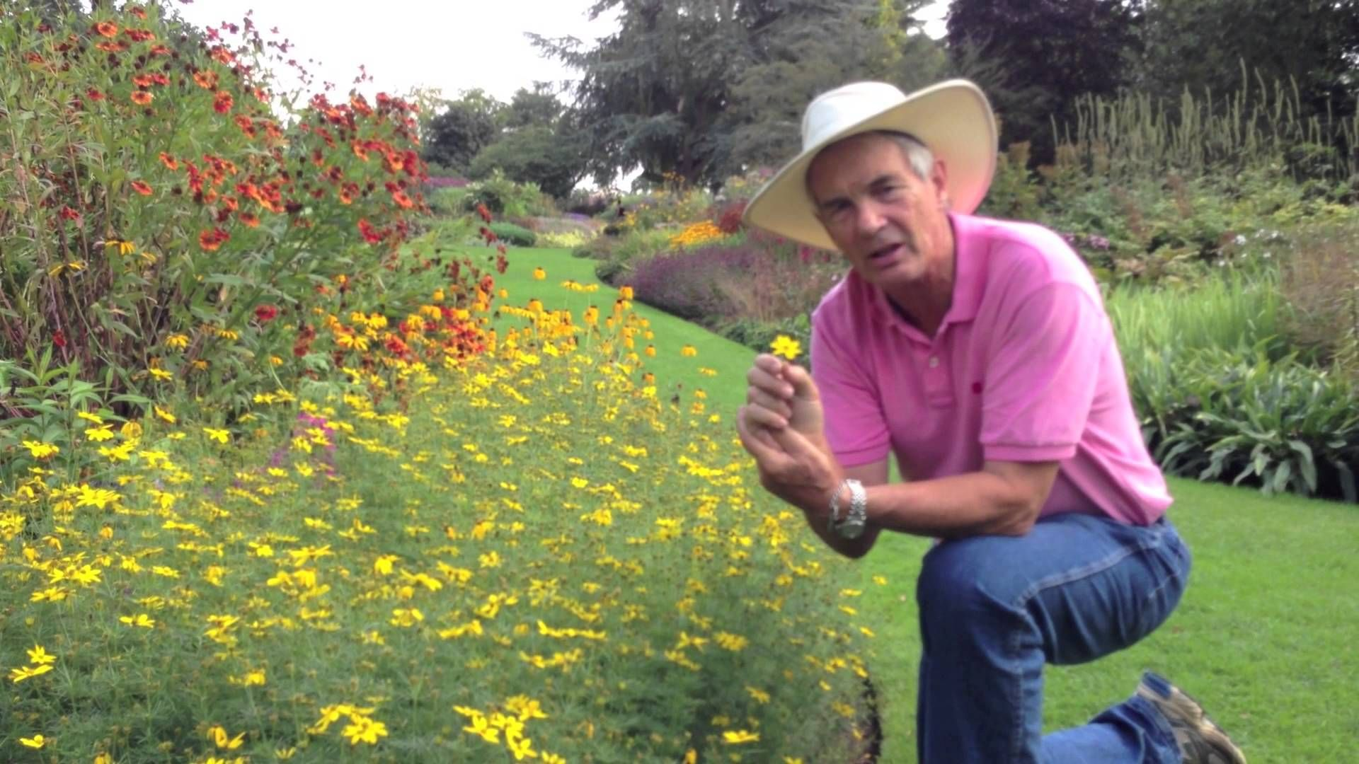 Dr. A on Coreopsis verticillata Cowboy hats, Style