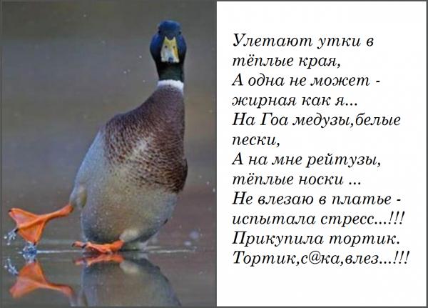 этой улетают утки в теплые края картинки прикольные время крещения ульяна