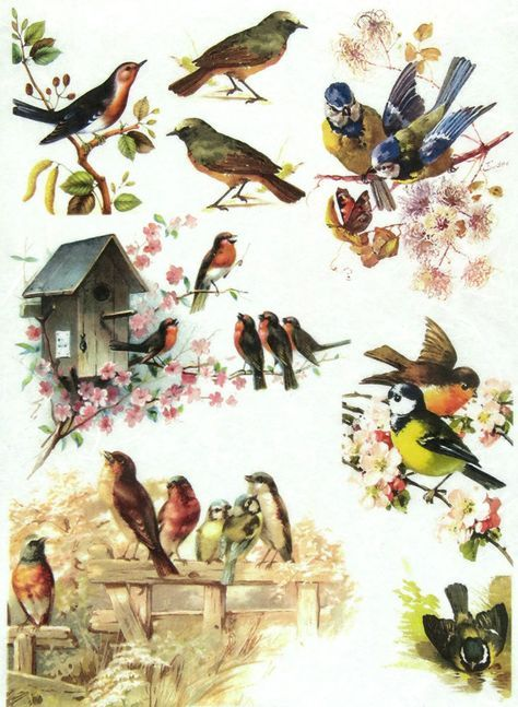 Rice Paper for Decoupage Scrapbook Craft Sheet Winter Birds