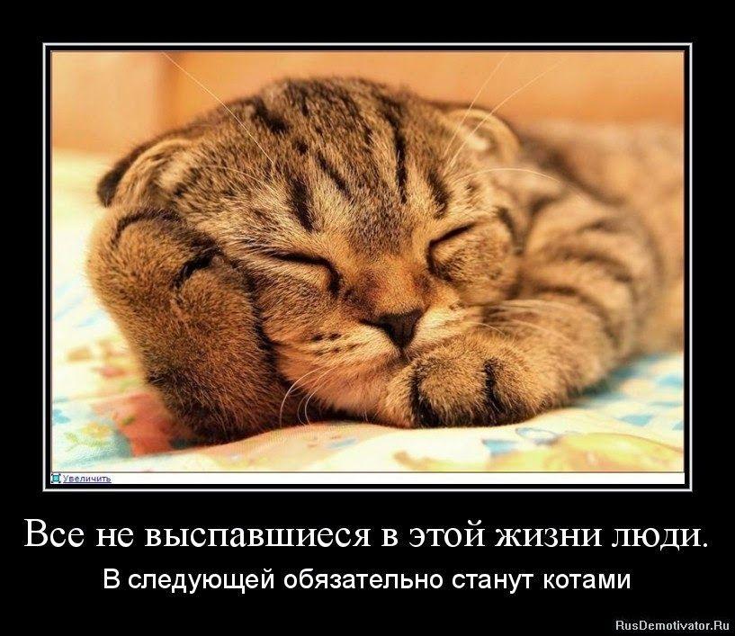 Домик вышивающей кошки: Жизнь под знаком телефона