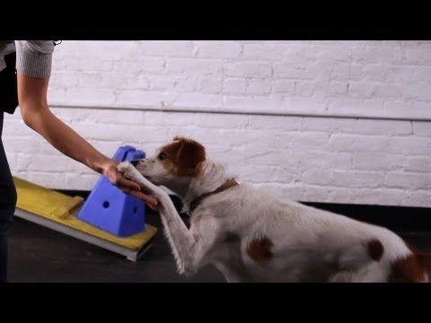 10 Fun Impressive Tricks You Can Teach Any Dog Dog Hacks Dog