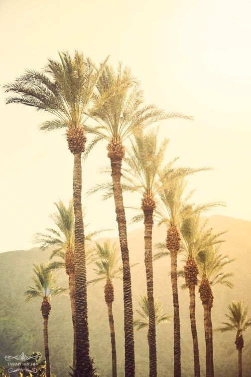 Palms in Sunlight