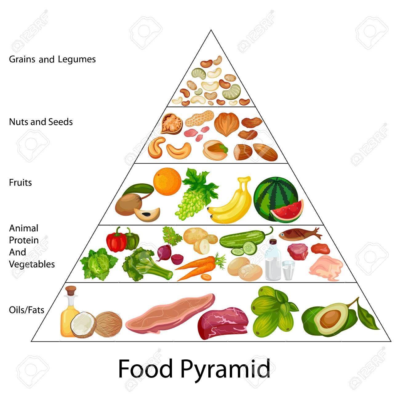 Education Chart Of Food Pyramid Diagram Ad Chart