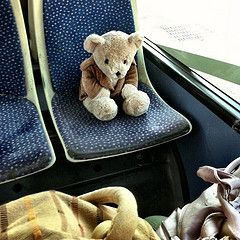 Image result for teddy on a bus