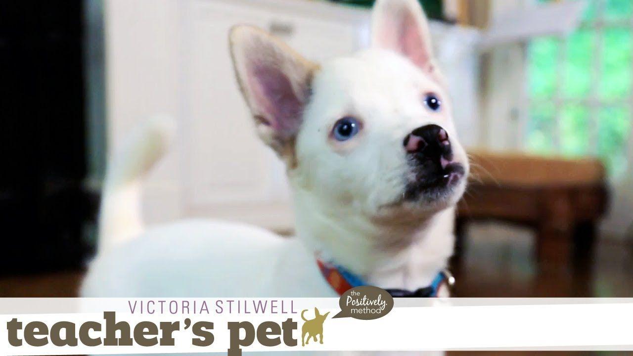 Potty Training A Puppy Teacher S Pet With Victoria Stilwell