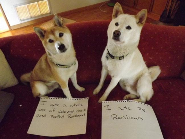 30 Cachorros Bagunceiros