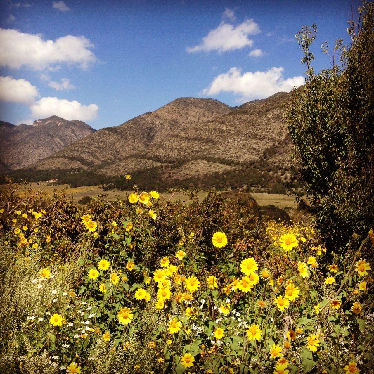 Arteaga Coahuila parte de su flora