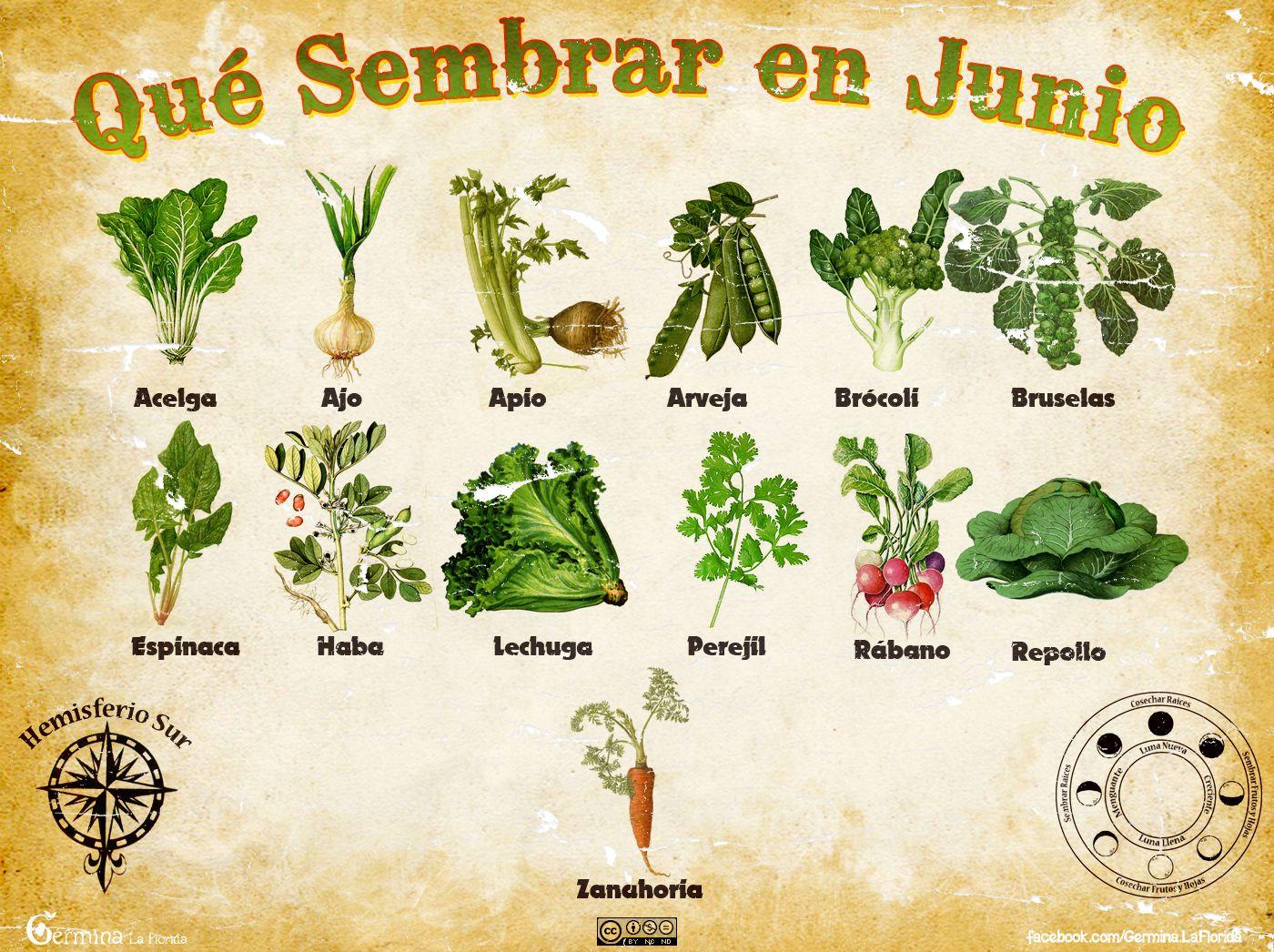 Calendario de siembra de junio huerta pinterest for Huerto urbano que plantar