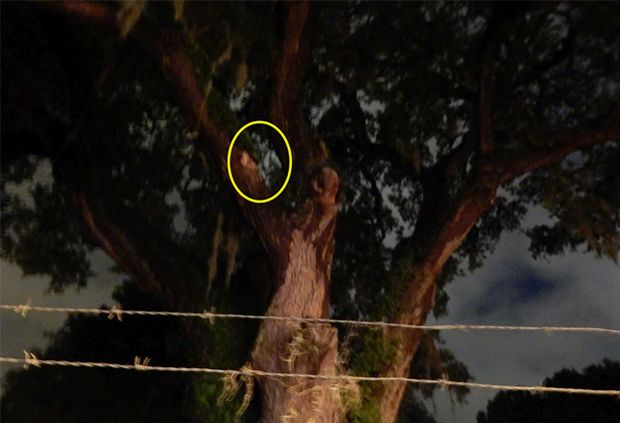 Real Ghost Pictures: The Tolomato Cemetery tragedy